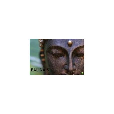Balinais 1h00 ou 1h30